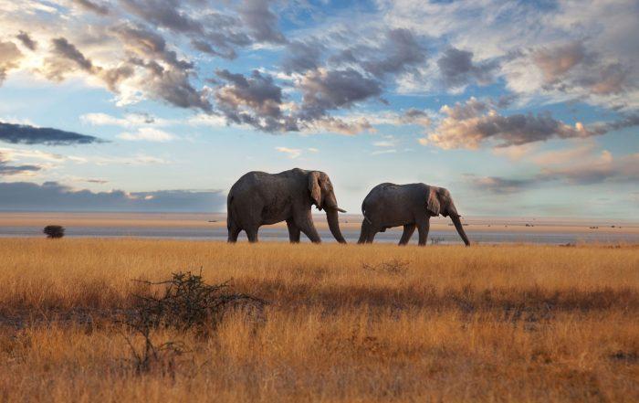 Brodynt Africa